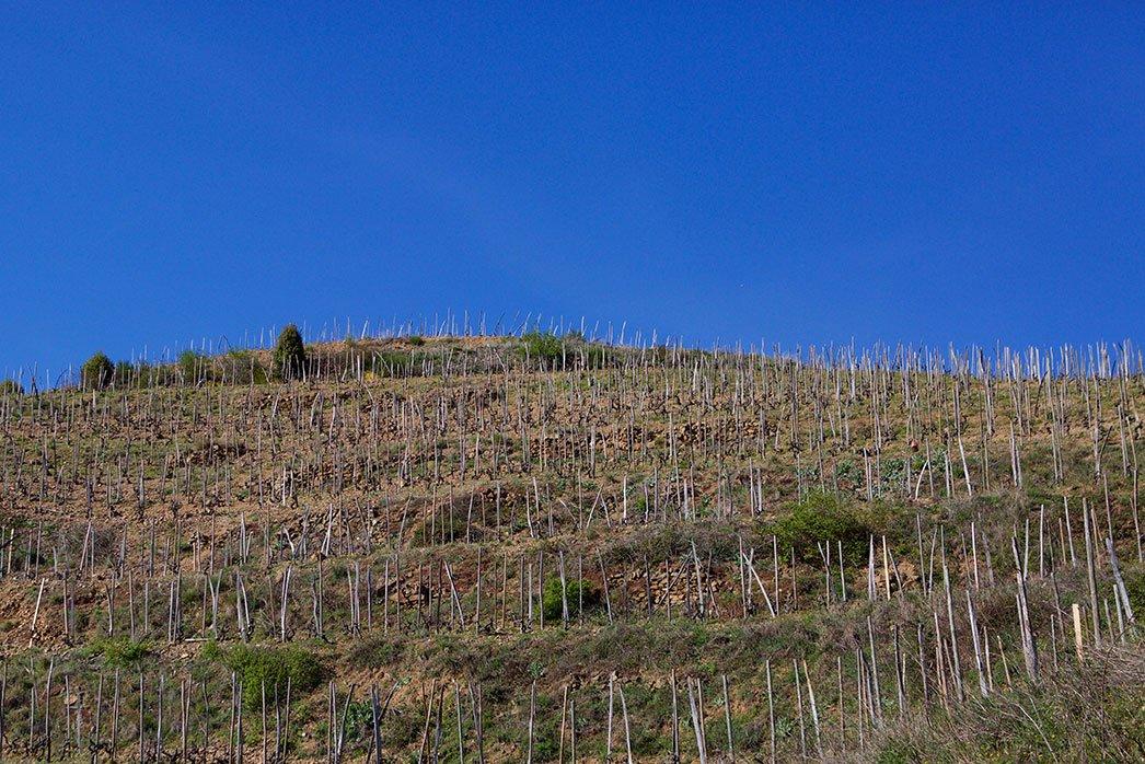 Rousset vineyards