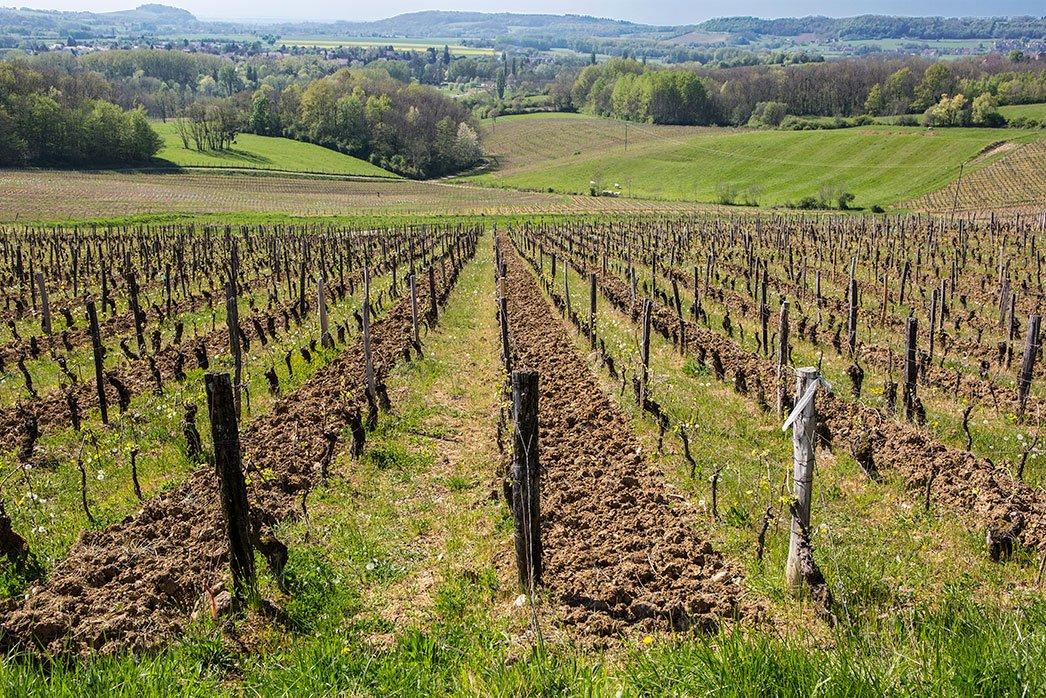 Credoz Vineyards Cotes de Jura