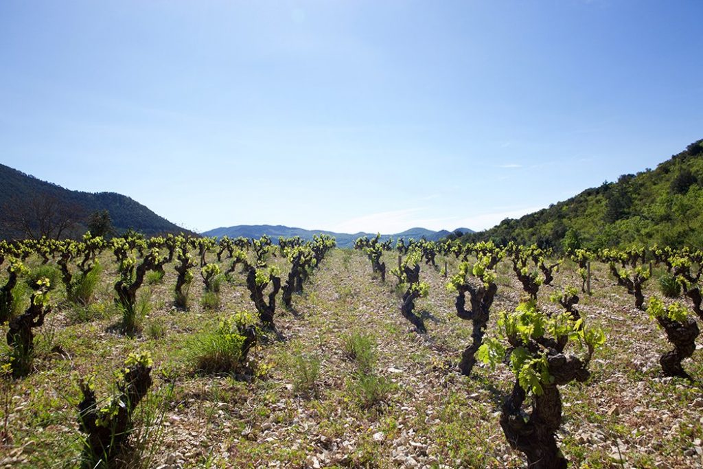 Pas de l Escalette Vineyard