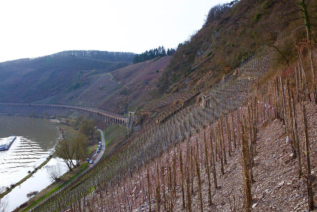 Clemence Busch Vineyards