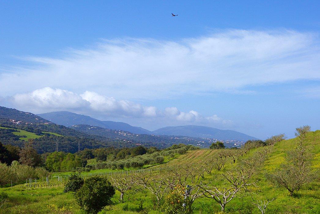 Corsica landscape