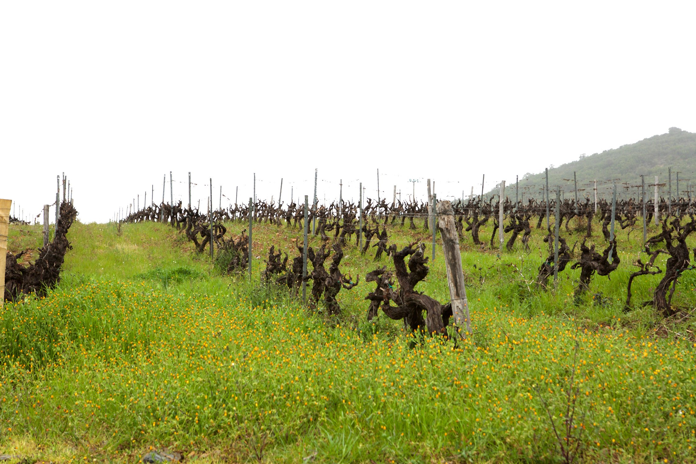 Clos Fornelli Vineyards