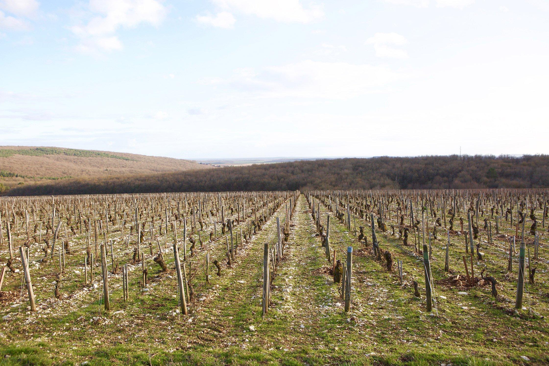 Emmanuelle Mellot vineyard